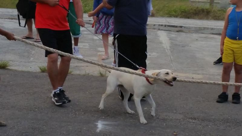 Hasta este juguetón perro participó en la tracción de la soga.